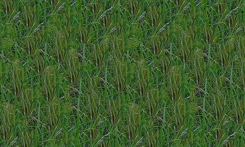 Large-Grass