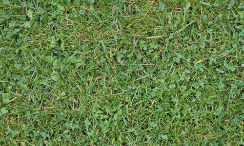 Grass-01